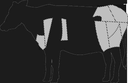 Europäisches Rind