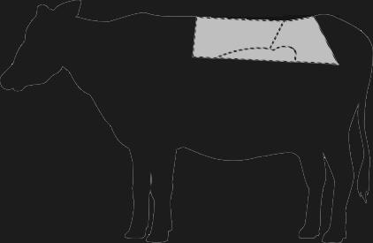 Südamerikanisches Rind